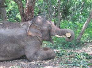 sunder-new-home
